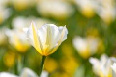 Цветки и луг крупного плана лета яркий ландшафт Вдохновляющая предпосылка знамени природы Стоковое фото RF