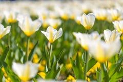 Цветки и луг крупного плана лета яркий ландшафт Вдохновляющая предпосылка знамени природы Стоковые Фотографии RF