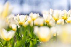 Цветки и луг крупного плана лета яркий ландшафт Вдохновляющая предпосылка знамени природы Стоковая Фотография RF