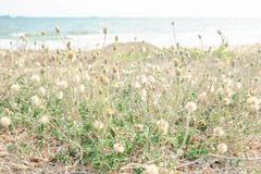 цветки и море стоковые изображения