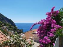 Цветки и море стоковые фотографии rf