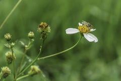 Цветки и насекомое Стоковое Изображение RF