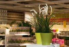 Цветки и домашний магазин оформления Стоковое фото RF
