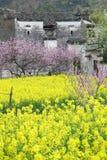 Цветки и дом Стоковое Фото