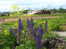 Цветки и отрезанные деревья около русской деревни Стоковая Фотография