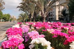 Цветки и ладони стоковые фотографии rf