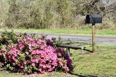 Цветки и почтовый ящик Стоковые Изображения RF