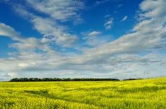Цветки и поле Стоковое Изображение