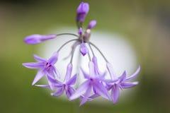 Цветки и природа макроса Стоковые Фотографии RF