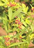 Цветки и пчела меда стоковые изображения rf
