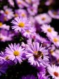 Цветки и пчела Стоковые Фото