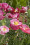 Цветки и пчела Стоковая Фотография RF
