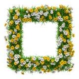Цветки и рамка зеленой травы Стоковые Фото
