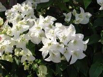 Цветки и сад Стоковое Изображение RF