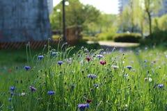 Цветки и свет Стоковое Фото
