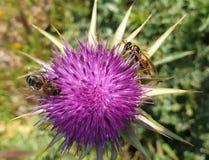 Цветки и типы пчел стоковая фотография rf