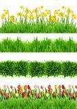 Цветки и трава весны Стоковое Изображение