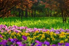 Цветки и трава Стоковое фото RF