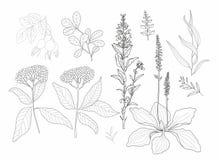 Цветки и травы вектора бесплатная иллюстрация