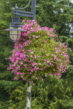 Цветки и уличный фонарь Стоковая Фотография RF