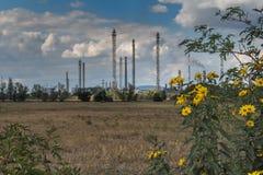Цветки и фабрика Стоковое Изображение RF