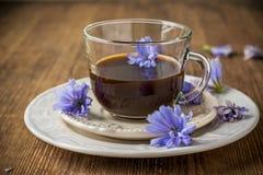 Цветки и чай цикория от цикория стоковое изображение