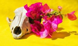 Цветки и череп Стоковое Изображение RF