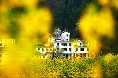 Цветки и эмблема рапса посылают конструкцию Стоковые Фото