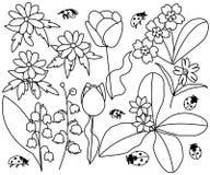 Цветки и ladybirds весны установили иллюстрацию Стоковое Изображение RF