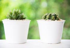 Цветки кактуса зеленого растения Стоковое фото RF