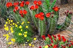 Цветки кактуса на ворот стоковые фотографии rf