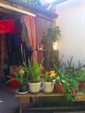 Цветки кактуса Стоковое Изображение RF