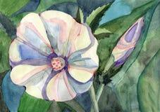 Цветки картины акварели Стоковая Фотография