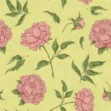 Цветки картины вектора безшовные Зацветая пион с открытым и закрытым бутоном, листьями и хворостинами Графическая иллюстрация Стоковые Изображения RF