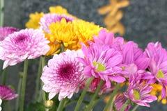 цветки кладбища Стоковые Изображения