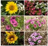Цветки, коллаж стоковые изображения rf