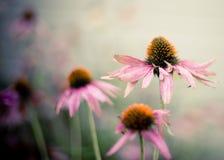 Цветки конуса в саде стоковые фото