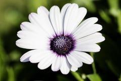 Цветки конца-вверх Стоковое Изображение RF