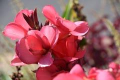 Цветки коралла Стоковые Изображения RF