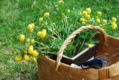 цветки корзины Стоковое фото RF