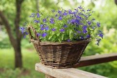 цветки корзины стоковое изображение rf