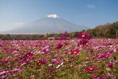 Цветки космоса и гора Фудзи Стоковое фото RF