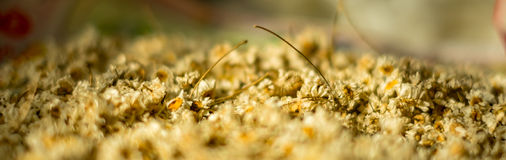 Цветки, который нужно высушить Стоковая Фотография RF