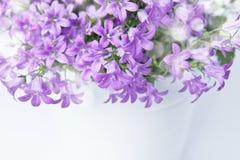 Цветки колокола колокольчика Стоковые Изображения
