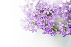 Цветки колокола колокольчика Стоковые Изображения RF