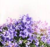 Цветки колокола на белой деревянной предпосылке, конце вверх Стоковое Изображение RF