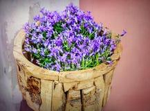 Цветки колокольчика Стоковые Изображения RF