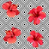 Цветки красного гибискуса тропические на картине геометрической предпосылки безшовной иллюстрация вектора