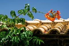 Цветки красного цвета whit зеленого растения стоковая фотография