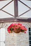 Цветки красной или розовой петуньи на стене Стоковое фото RF
